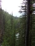 Random photo of the trees.