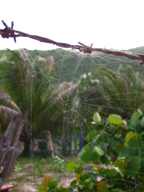 A spider web along the beach in Josiah's Bay.